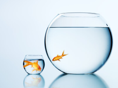 build a brand identity is like big fish in a small bowl
